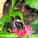 Field Trip Friday ~ To The Butterfly Gardens