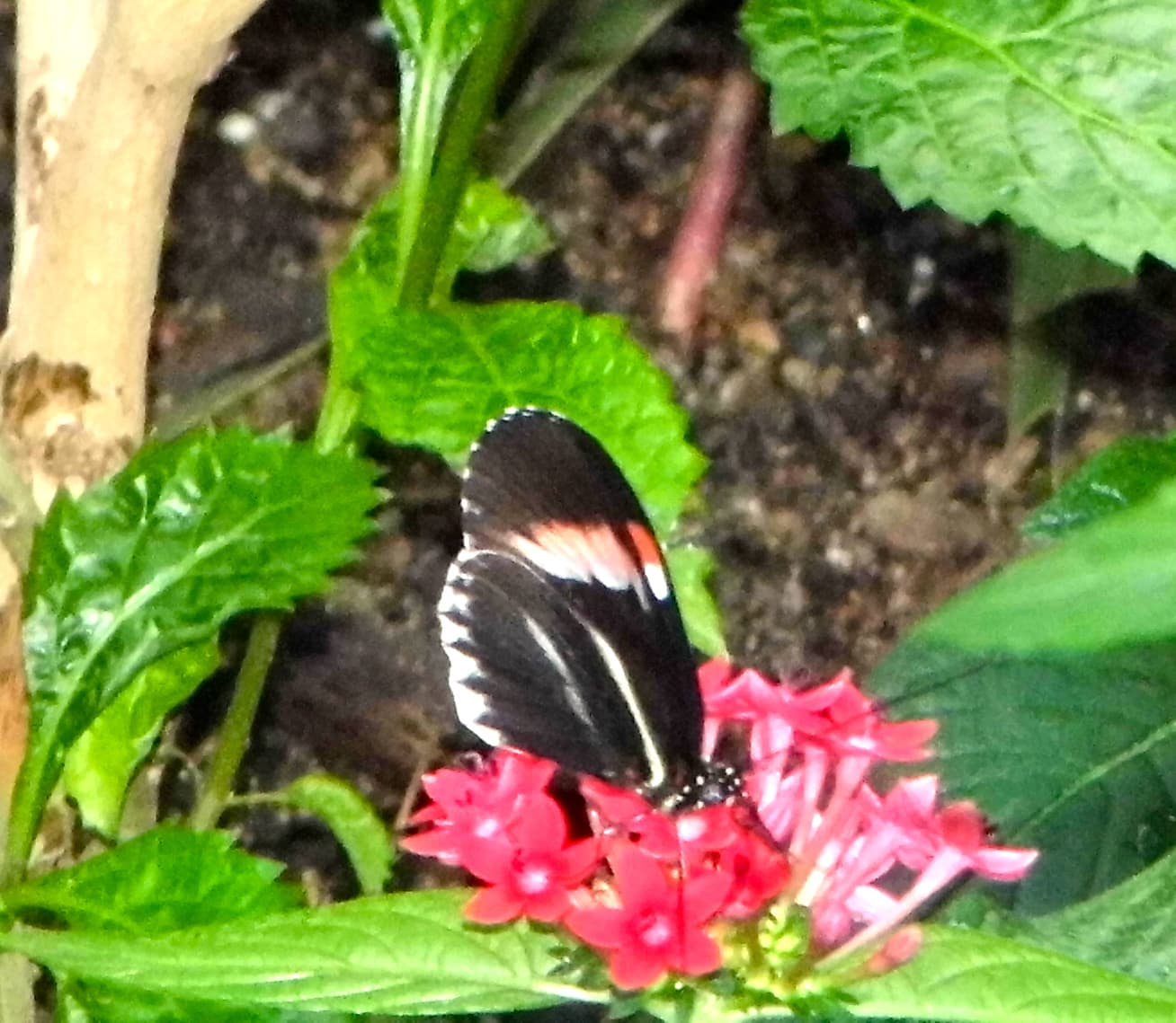 Butterflies_27