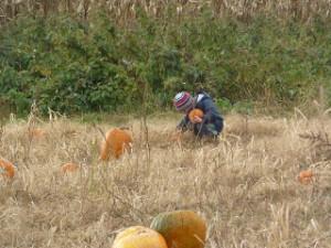 Pumpkin Learning Activities