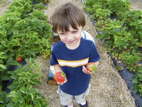 Strawberry_Picking_With_Kids_3
