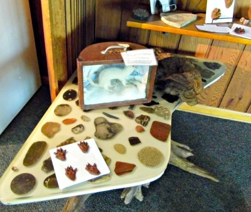 Things-To-Do-In-Michigan-Blanford-Nature-Center