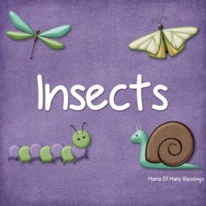 Insects-Learning-Ideas