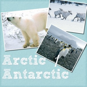 Arctic-Antarctic-Learning-Ideas