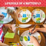 Lifecycle Of A Butterfly Craft For Kids