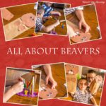 Hands On Learning Fun with Beavers