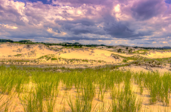 Ludington Sand Dunes Michigan Field Trips In Michigan