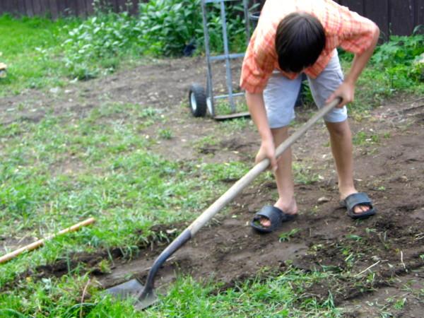 Gardening-With-Kids-4