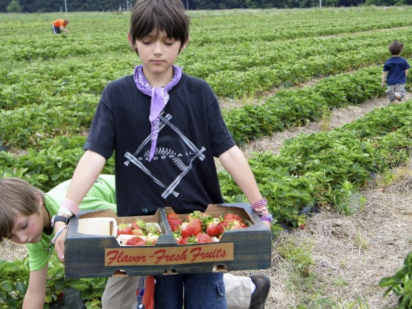 Strawberry_Picking_With_Kids_7