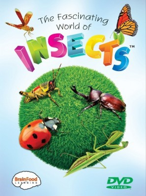 The-Fascinating-World-Of-Insects