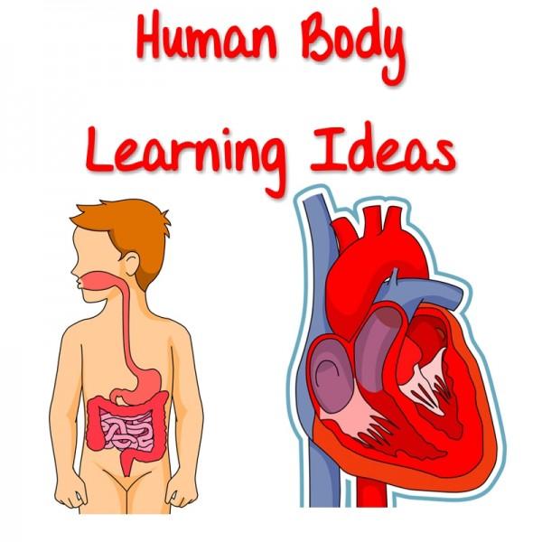 Human Anatomy Ideas