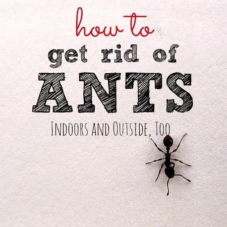How-to-get-rid-of-ants-from-HousewifeHowTos