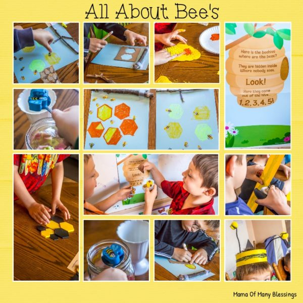 Learning All About Bee Homes