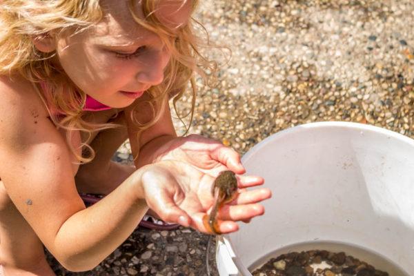 Catching-Tadpoles