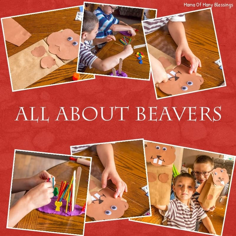 All-About-Beavers