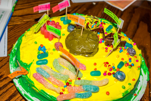 Cell Model Cake How To Really Bring Science To Life For Kids