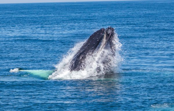 Cape Cod Whale Watching Tour-1