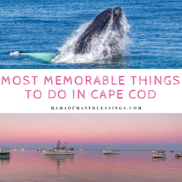 Most Memorable Things To Do In Cape Cod Square
